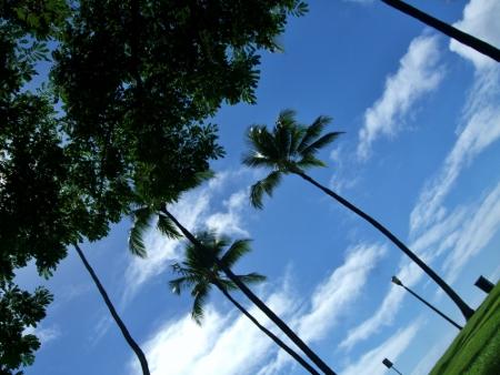 ハワイ カピオラニ公園