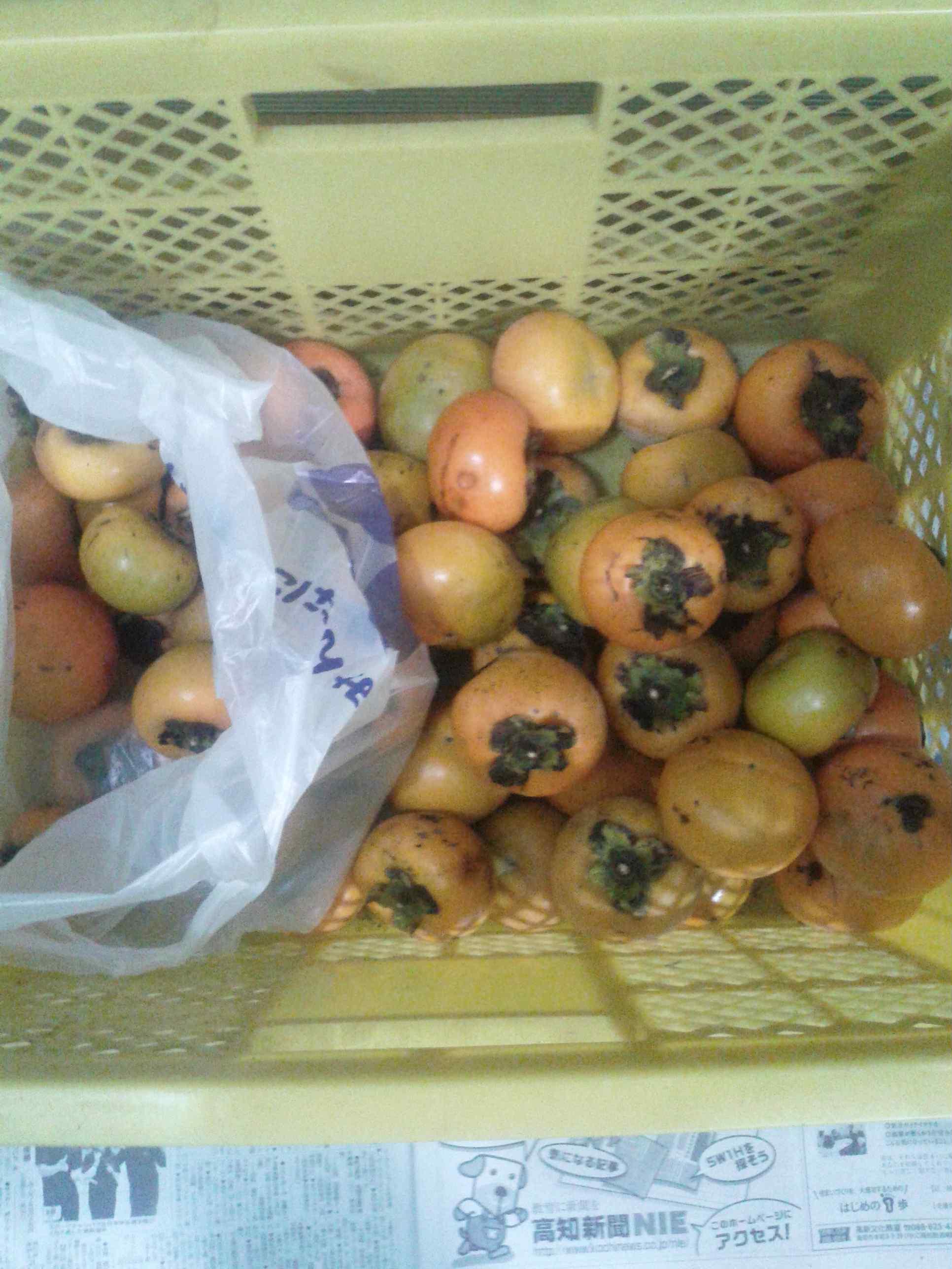 2017.10.19(木)の柿の収穫