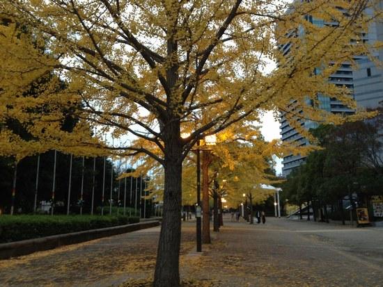 1銀杏の木と7550.jpg