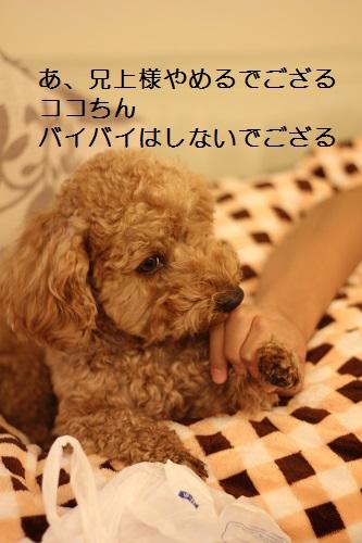2014_1209_183413-IMG_3496.JPG