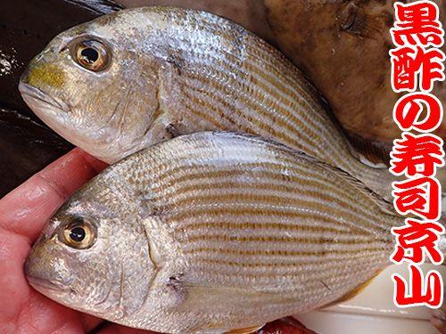 ヘダイ 寿司 出前 未利用魚