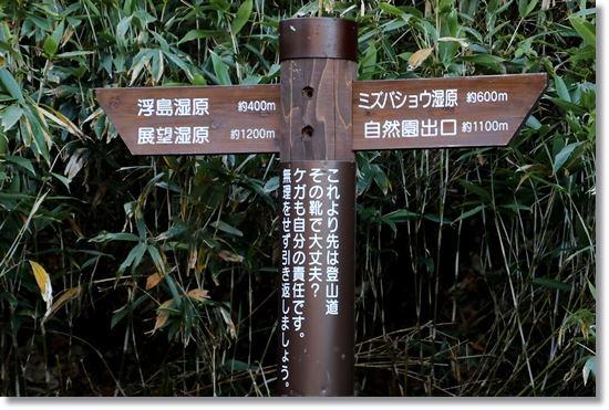 栂池自然園-46 楠川-4 15.10.2