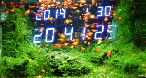 熱帯魚水槽=電波時計
