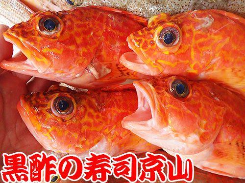 寿司の種類 宅配寿司 アヤメカサゴ