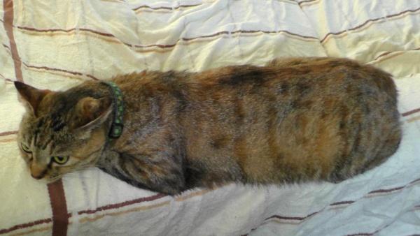 猫の毛が毛羽立っている