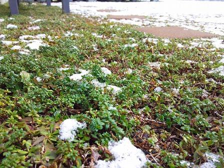 雪とロンギカウリス2