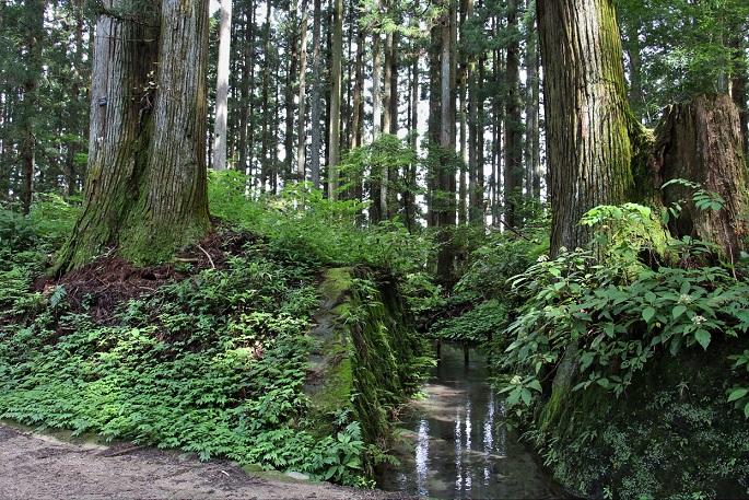 4.並木道の渓流.JPG