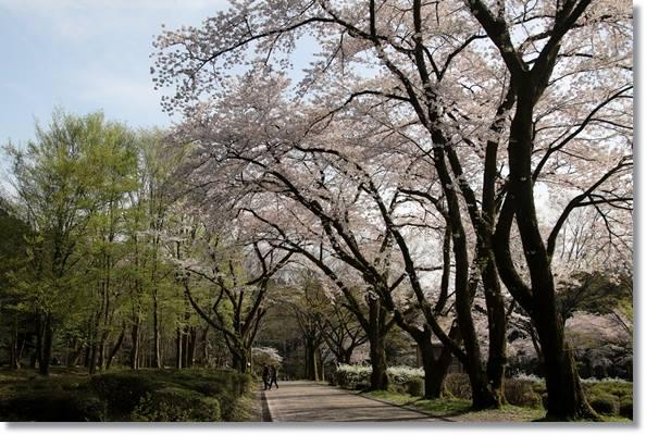 樹木公園-82 16.4.9