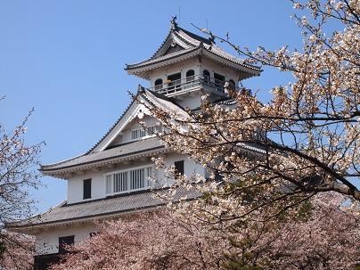 2013年4月 長浜城の桜.jpg
