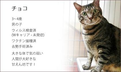 choko120722.jpg