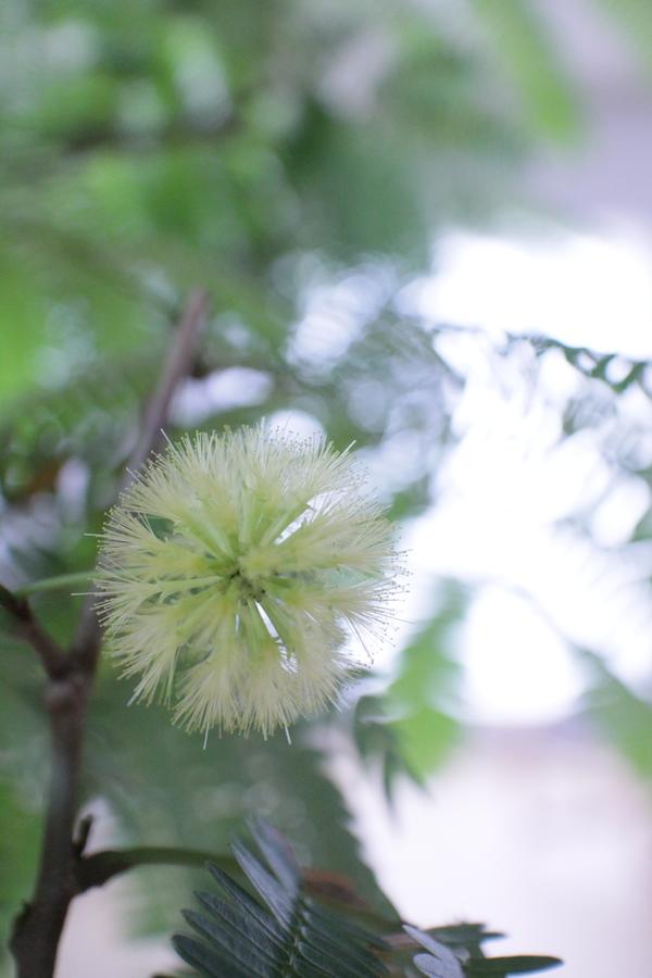 エバー花1.JPG