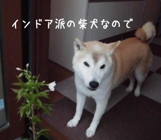 0411子孫sakura3.jpg