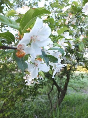 20130525 03 flower.jpg