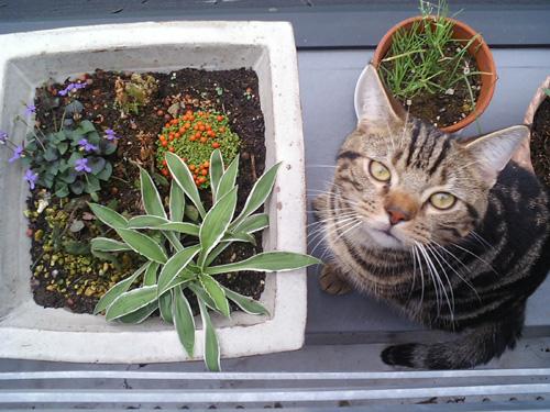 200606猫と植木.jpg