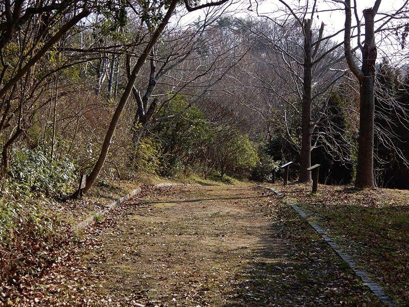 香りの丘13