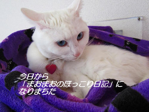 IMG_7631.jpg