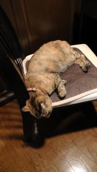 猫の変な寝相