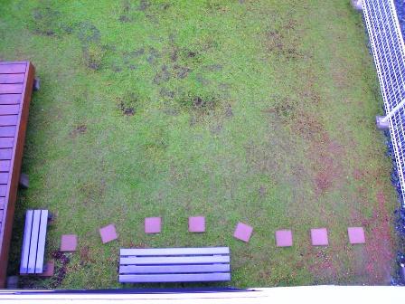 11月11日の庭