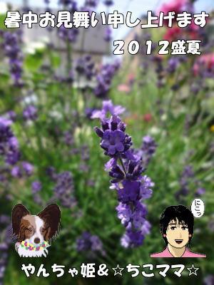 20012暑中お見舞い_☆ちこママ☆さん