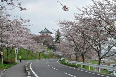 涌谷町の桜