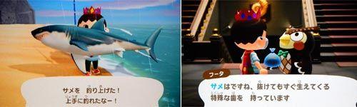 森 サメ 釣れ ない とび
