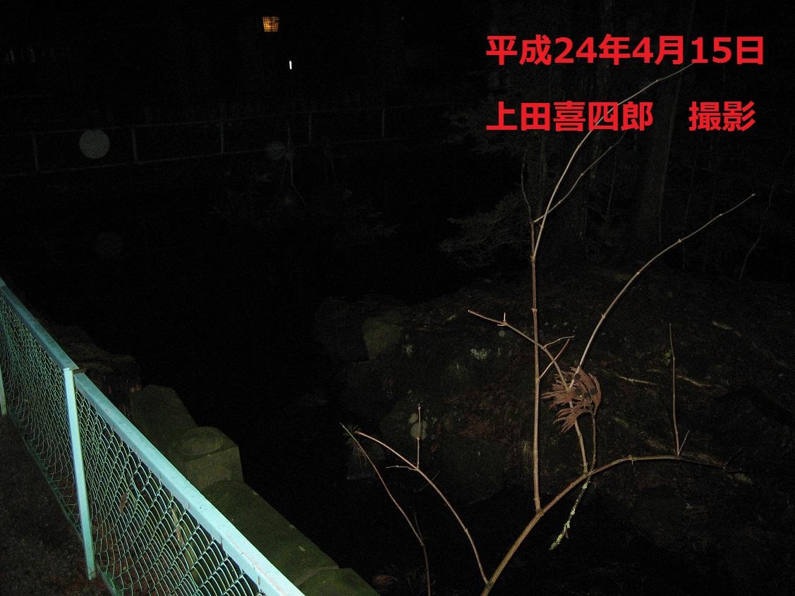 諏訪大社 池2