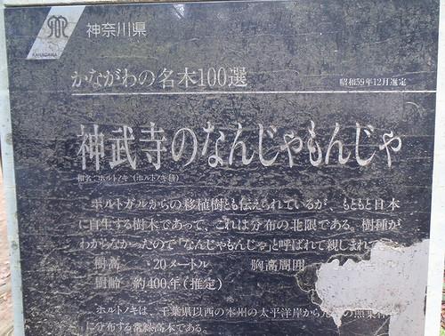 20130526 なんじゃもんじゃ看板