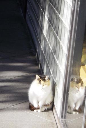 一心寺さんの三毛猫さん