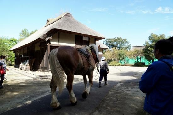 古民家と馬