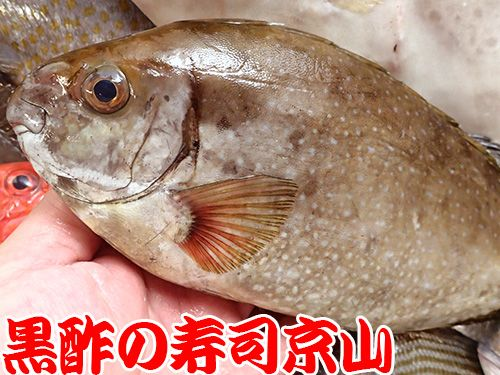 寿司 出前 江東区 冬木