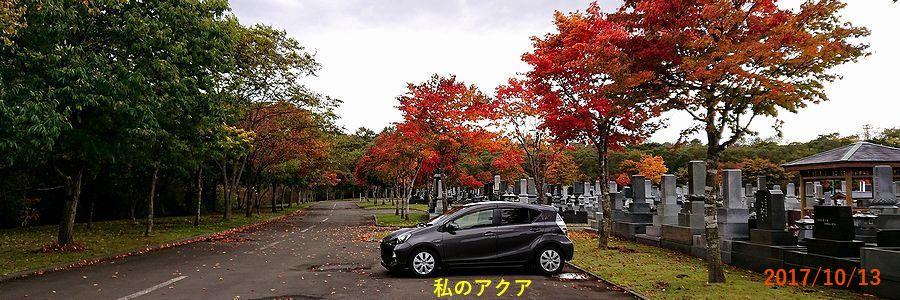 10/13千歳霊園の紅葉.jpg