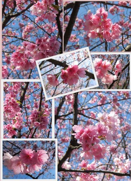 お花見樹林公園20145.jpg