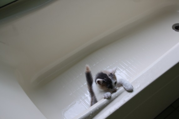 浴槽の中に.JPG