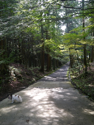 2012京都夏3−37.JPG