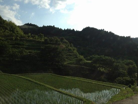 1水田風景5506.jpg