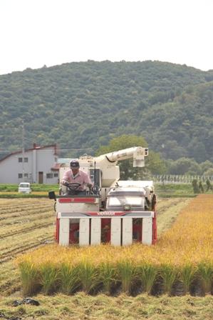 250909お米収穫01