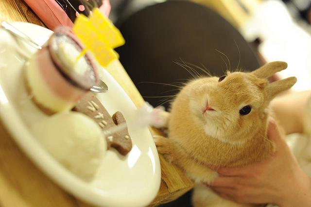 ウサギとデザート1].jpg