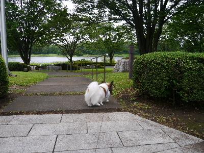 2012昭和記念公園2.JPG