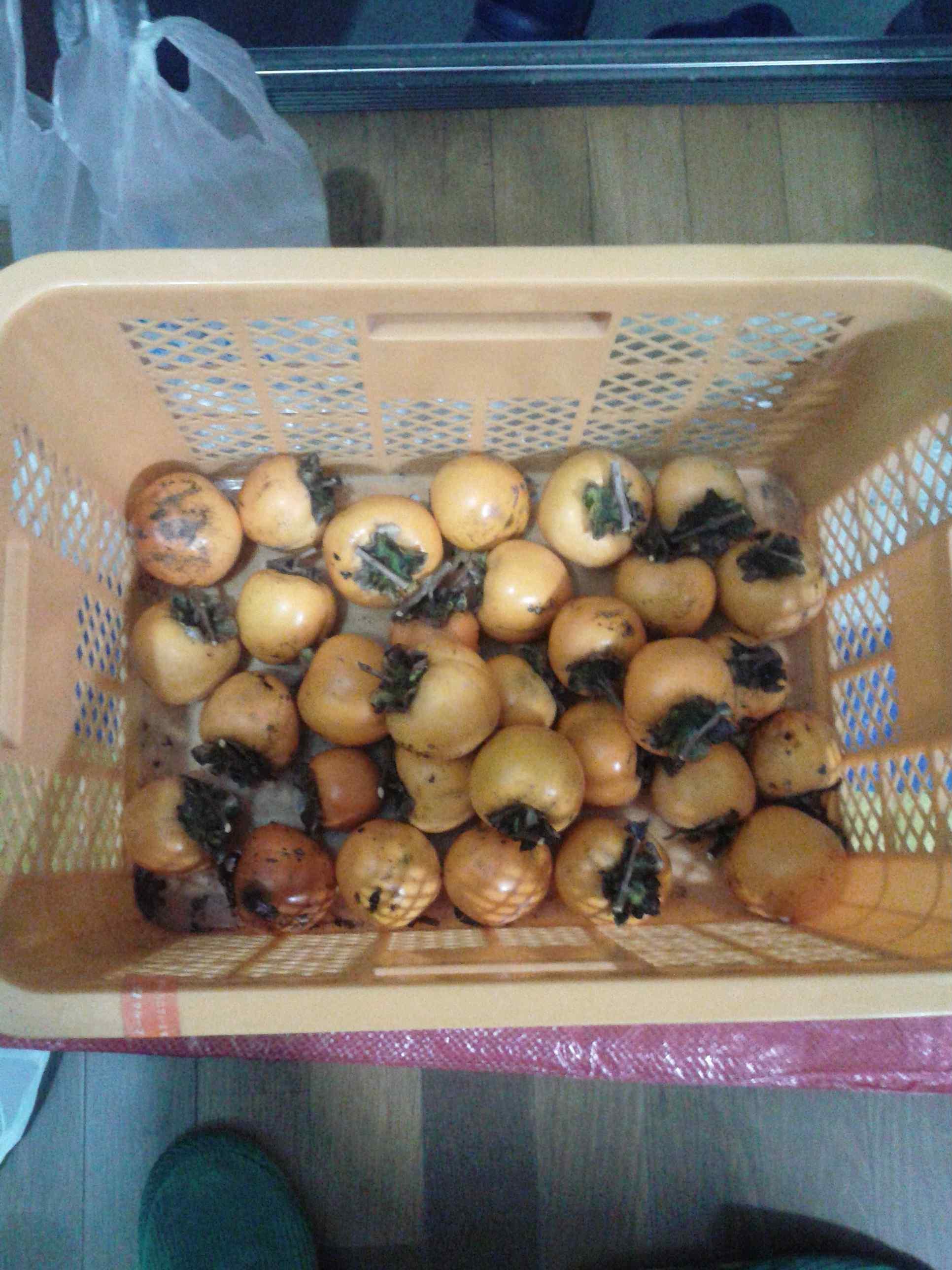 2017/11/4(土)の渋柿の収穫