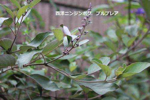 2014_0712_164747-IMG_3001.JPG