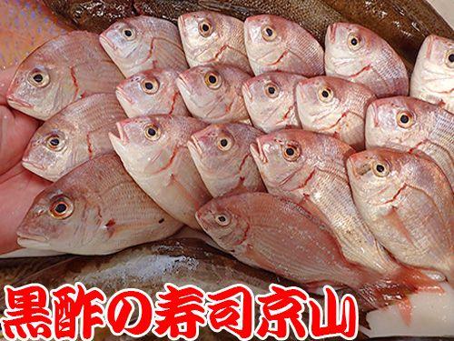 寿司 出前 新鮮 港区 元麻布