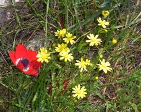 こんなお花がたくさん咲いていました