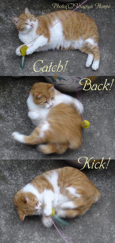 じゃれ猫3カット