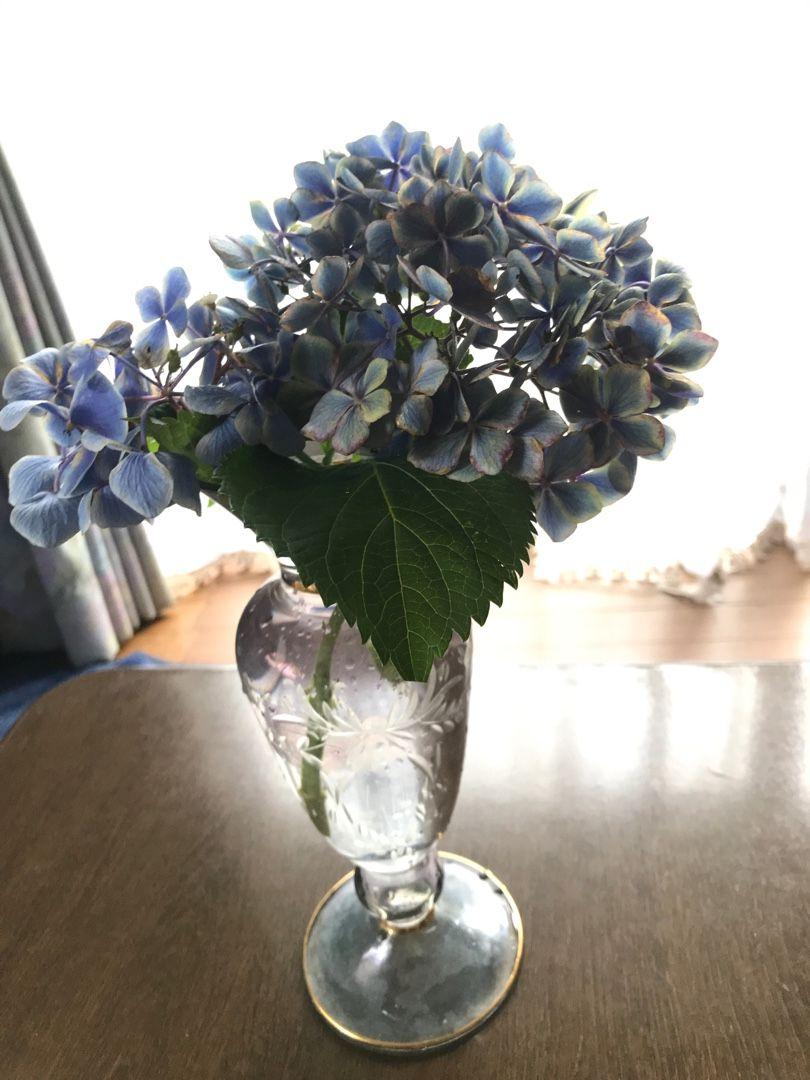 うちに帰ったら、夫が剪定した紫陽花がそのまま庭に放置されてた