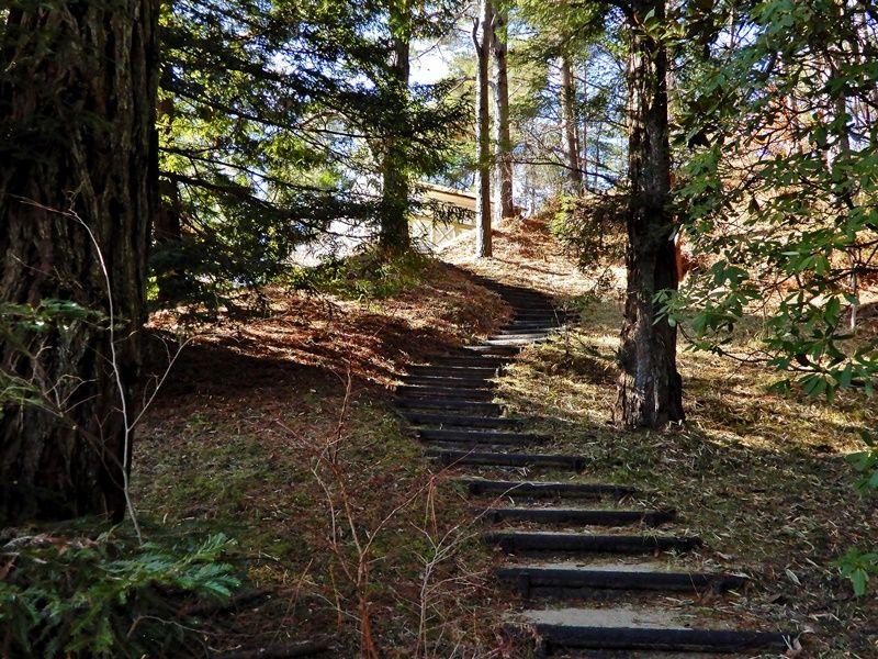 シアトルの森7