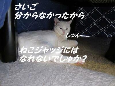 猫ジャッジになれないでしゅか?.jpg