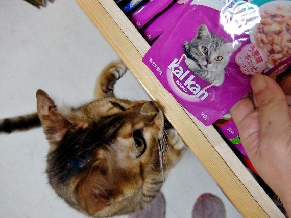 ねこ ネコ 猫 エサ選び 好き嫌い