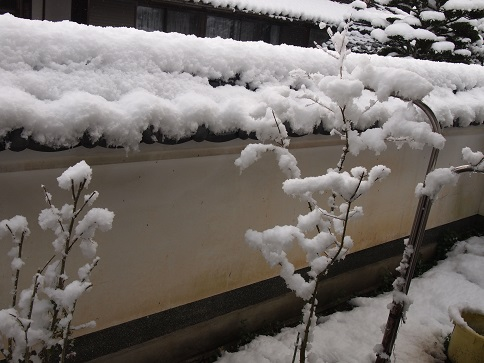 2013年12月  初の積雪.jpg