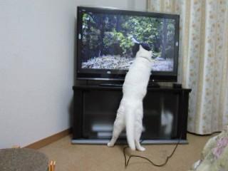 TVに突進.jpg