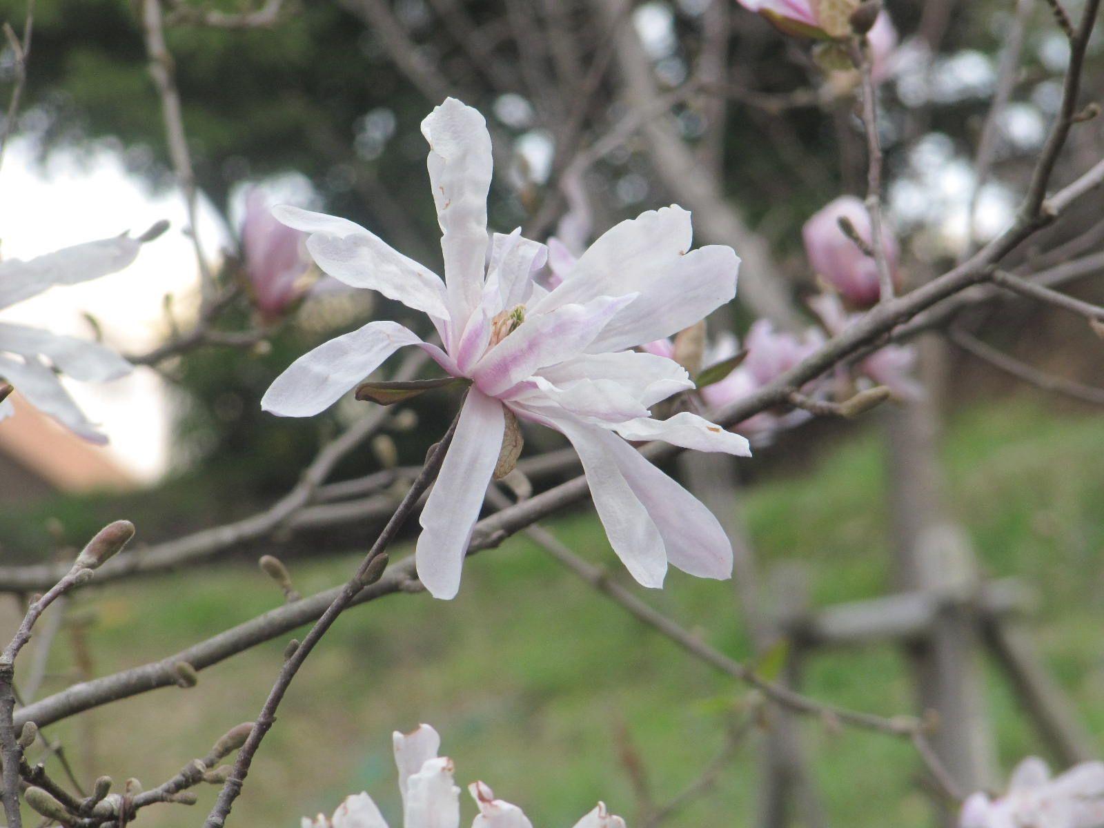 技法 表現 に 春 詩
